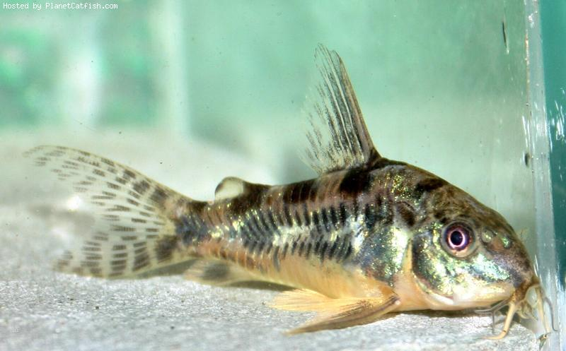 Полностью с Вами согласен.  Красивые рыбки, мне понравились.