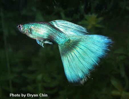 http://world-of-water.ucoz.ru/greenmoscow_bryanchin_photobryanchin.jpg